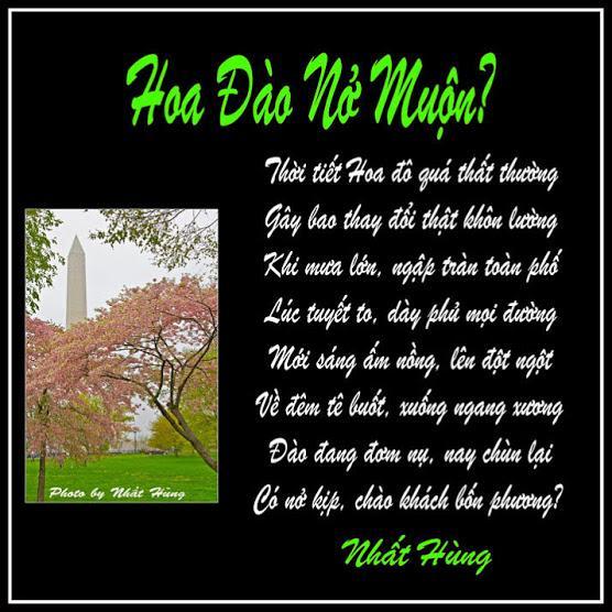 4nh Hoa Dao