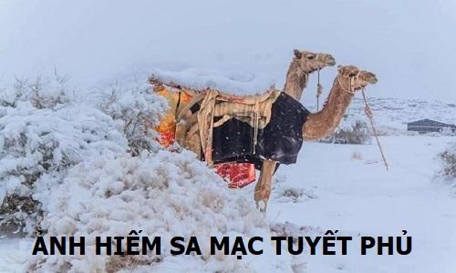 Sa Mac Tuyet