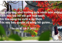 Sachile Mua Phuong 20